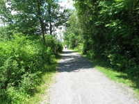 Lots of people walk, run, and bike along this trail system, June 2013